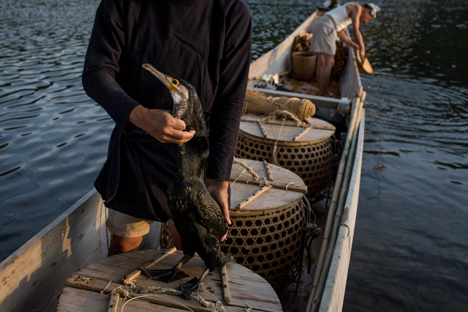 02072014_Cormorant_Fishing_1842